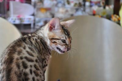 20150817_kittens177