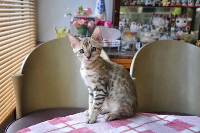 20150817_kittens199