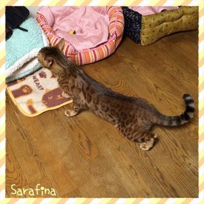 Cat2_011