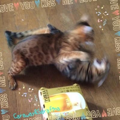 Cat_3242