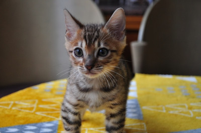 20151215_kittens005
