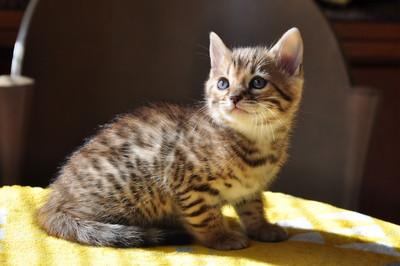 20151217_kittens001