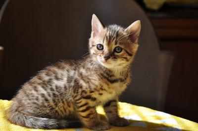 20151217_kittens002