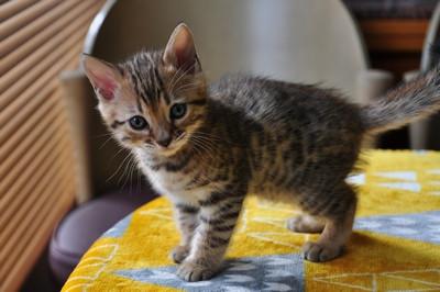 20151217_kittens011