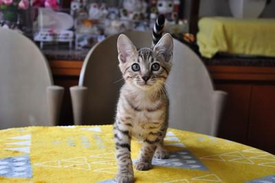 20151217_kittens026