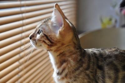 20151217_kittens052