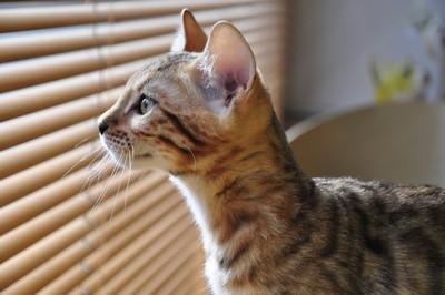 20151217_kittens053