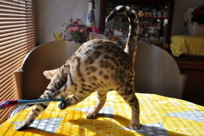 20151217_kittens060