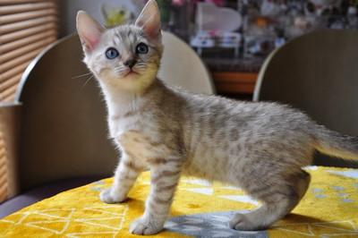 20151217_kittens078