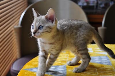 20151217_kittens082